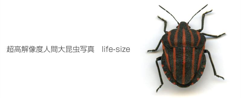 超高解像度人間大昆虫写真life-size